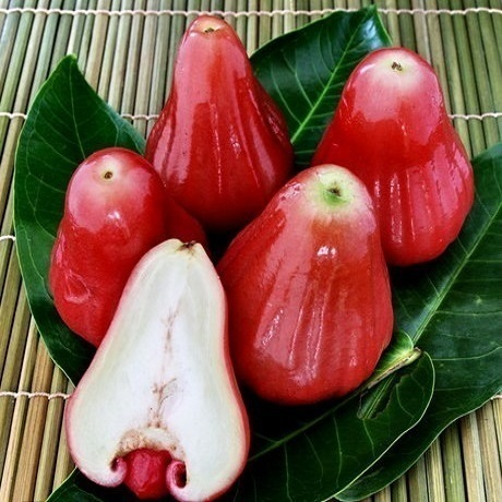 Buy Rose Apple Fruit Online